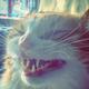 Аватар пользователя NemesidaFrost12