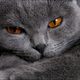 Аватар пользователя Seljanin