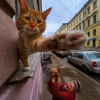 Аватар пользователя Reshetov