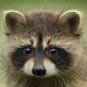 Аватар пользователя PIP.RZN