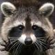 Аватар пользователя RVprimus
