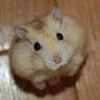 Аватар пользователя MouseMD