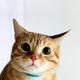 Аватар пользователя kaljamalja