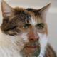 Аватар пользователя eegogoshka
