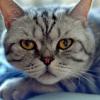Аватар пользователя arhey85