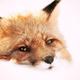 Аватар пользователя FoxyMoxy777