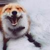 Аватар пользователя Lisichka1981