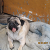 Аватар пользователя kipovez7