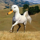 Аватар пользователя freespice