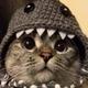 Аватар пользователя VasyPupkin
