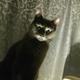 Аватар пользователя Musyamarusy