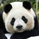 Аватар пользователя PandaAfanaciy