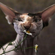Аватар пользователя buskipupuski