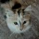 Аватар пользователя Shaiba8