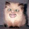 Аватар пользователя AlexxFFC