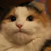 Аватар пользователя 4awka4a9