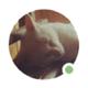 Аватар пользователя osdever