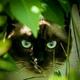 Аватар пользователя kir767676
