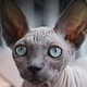 Аватар пользователя YaPelmeshko