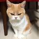 Аватар пользователя OXOTAHAEHOTA