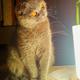 Аватар пользователя Bucya