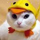 Аватар пользователя dimonne