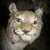 Аватар пользователя BIBOY1