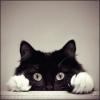 Аватар пользователя Dnlk686