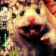 Аватар пользователя damai