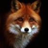 Аватар пользователя Lis401