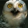 Аватар пользователя SurprisedBird
