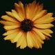 Аватар пользователя melomanka56