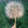 Аватар пользователя alexRototo