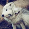 Аватар пользователя YanaYanochka