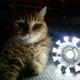 Аватар пользователя CatsAndLamps