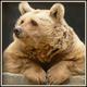 Аватар пользователя Rommel5