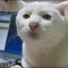 Аватар пользователя u3bIgu