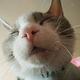 Аватар пользователя Sneg2501