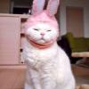 Аватар пользователя Nookis