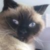 Аватар пользователя Esea