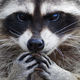 Аватар пользователя marsovna96