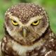 Аватар пользователя nTu4ka