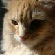 Аватар пользователя KingCatRostov