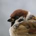 PcBird