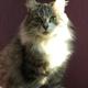 Аватар пользователя lisetskaya