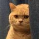 Аватар пользователя kzkzkz