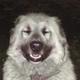 Аватар пользователя Migellle