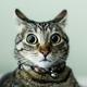 Аватар пользователя Geesson