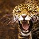 Аватар пользователя j1nuary5