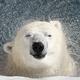 Аватар пользователя arctic.man